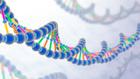 Moleküler Genetik Doç. Dr. Hüseyin Aksoy
