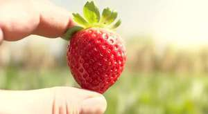 A tale about strawberries